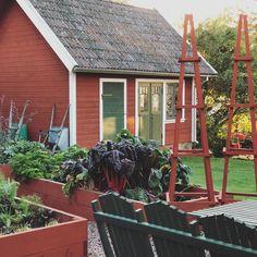 Bilden kan innehålla: växt och utomhus