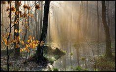 Mroczne lasy w Stryszawie