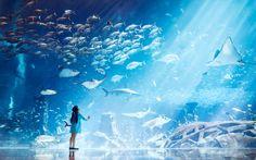 The Lost Chambers Aquarium en Hotel Atlantis Fantasy Art Landscapes, Fantasy Landscape, Atlantis, Aesthetic Art, Aesthetic Anime, Dubai Aquarium, Big Aquarium, Dubai Nightlife, Aquarium Pictures
