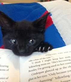 Reading a book. | 22 Everyday Tasks That Become Real Struggles When You Get A Cat THE BOOK IS WARRIORS!!!!!!!