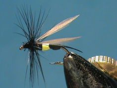 Wasp - Bee's are an often overlooked terrestrial pattern but an important part of the trouts diet. Once in the water the bee is very vulnerable to fish. - fly fishing video channel - Global FlyFisher
