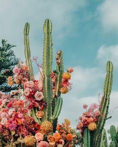 Desert Aesthetic, Flower Aesthetic, Cactus Flower, Cactus Plants, Cacti, Cactus Pictures, Image Deco, Image Citation, Wild Poppies