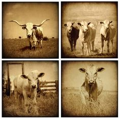 SALE 4 Rustic Western Country Cow Longhorn by 3LPhotography, $32.00