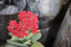 Succulents 7 by Charissa Lotter (de Scande) by Charissa Lotter (de Scande) on 500px
