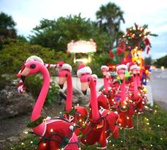 Pink Christmas flamingos by Beth W. Dobbins.