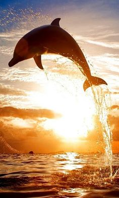 Why We Love Dolphins. Why We Love Dolphins.Because they are So Cute Adorable and Really Beautiful Animals♥ Please. Orcas, Beautiful Creatures, Animals Beautiful, Pretty Animals, Beautiful Beautiful, Fauna Marina, Water Animals, Delphine, Water Life