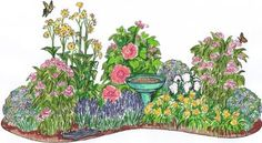 Garden Design With Butterfly Garden (Cup Plant, Fantasia Hibiscus, October  Skies With Garden .