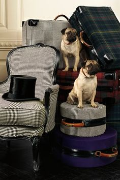 "ralphlauren: "" "" Ralph Lauren Home "" Presenting the latest fabric collection from Apartment No. One Shop The Collection "" Ralph Lauren home + pugs Fu Dog, Ralph Lauren Style, Pug Love, Cozy Blankets, Looks Vintage, Tartan Plaid, Tartan Decor, Travel Style, Decoration"