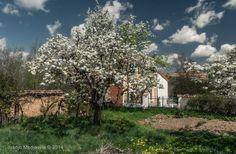 El renacimiento del viejo huerto ~ Fotografía Juanjo Mediavilla