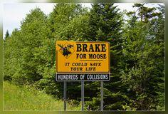 Brake for Moose!