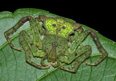 Cool Insects, Bugs And Insects, Sea Spider, Spider Webs, Horseshoe Crab, Itsy Bitsy Spider, Beautiful Bugs, Animal Heads, Beetle