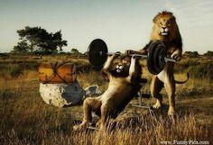Funniest Photoshop Animals | Funny Photoshopped Animals - Funny Photoshop Animal 010 (FunnyPica.com ...