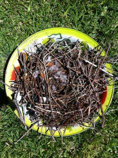 Found Nest - winter 2014