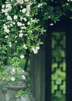 Wallpaper Nature Flowers, Beautiful Flowers Wallpapers, Beautiful Nature Wallpaper, Flower Wallpaper, Photo Backgrounds, Wallpaper Backgrounds, Flower Aesthetic, Jolie Photo, Anime Scenery