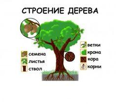 строение дерева Planting For Kids, Primary School, Botany, Science, Education, Plants, Learn Russian, Upper Elementary, Plant