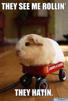 22 Animals Memes That Are Cuteness Overload - QuotesHumor.com