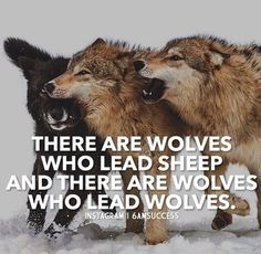 There are wolves who lead sheep and there are wolves who lead wolves.