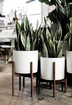 White Ceramic Cylinder with Wood Stand Decoration Modernica Planter - White ceramic cylinder with wa
