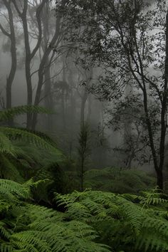 Through the green and into the grey.  In The MoodbyRanga 1