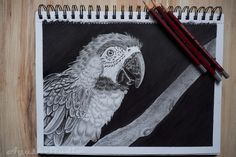 Parrot (graphite pencil and black marker) #Graphitepencil #pencil #drawing #rysunek #ołówek #grafit #parrot