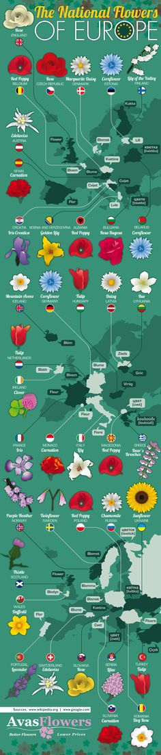 This infographic by Avas Flowers takes a look at the National flowers of all the countries that make up Europe. Here you will be able see what each flower looks like and you can also to trace where each one comes from.
