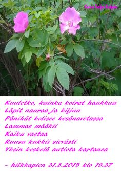 Kuvahaun tulos haulle kuvat hilkka laronia Plants, Pictures, Life, Photos, Photo Illustration, Planters, Plant, Resim, Planting