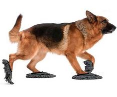 Doggie dusting slippers - a good way for your dog to help you around the house...if you can get it to wear them