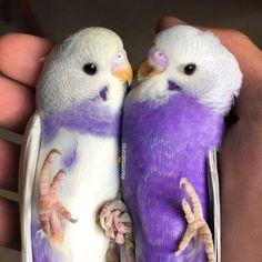 Amazing Birds, beautiful birds, colorful birds, birds of paradise, birds in flig. Funny Birds, Cute Birds, Pretty Birds, Beautiful Birds, Animals Beautiful, Beautiful Pictures, Pretty Animals, Cute Little Animals, Cute Funny Animals