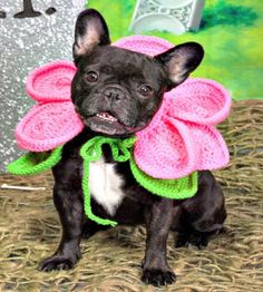 Crochet Blooming Dog Pattern - 26 Free Crochet Patterns For Pets to Make Their Life Easier - DIY & Crafts
