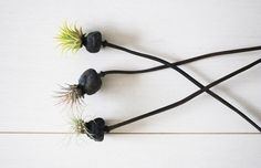 delicate poppy stems with little bursts of air plants. a necessity for the new home, I'm thinking.