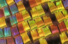 Using a technique known as photomicrography, where microscopes are linked to digital cameras, photographers are able to capture the beauty of the very small, like the wing scales of a moth