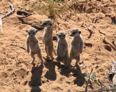 four little animals standing up