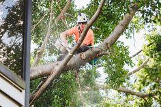 Tree cutting Service #treecutting #treetrimming #treeremoval #treeprunning