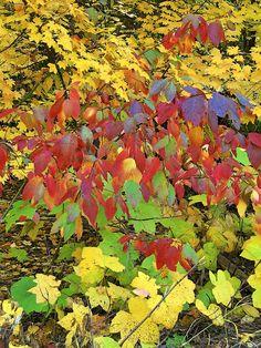 Fall Colors, Estonia #COLOURFULESTONIA #VISITESTONIA
