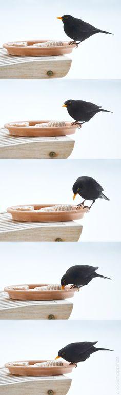 Pralinen für die Vögel Little People, Birds, Diy, Animals, Chocolate Candies, Animales, Bricolage, Animaux, Short People