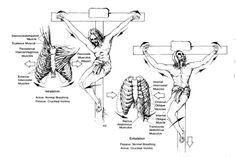 Brand, Ideas, Story, Style, My Life: Detail Anatomi dan Fisiologi Penyaliban dan Kemati...