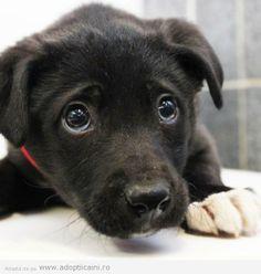 lovely  #dog #puppy #dublindog