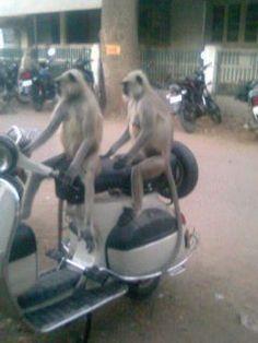 Monkey Bike Ride Funny