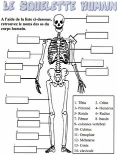 Os du corps humain the human body, human body unit, human body bones, h The Human Body, Human Body Unit, Human Body Systems, Human Eye, Human Body Science, Science Classroom, Teaching Science, Science For Kids, Science Activities