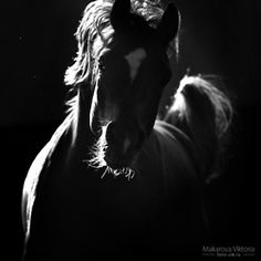 Dark and Light by Vikarus on deviantART Beautiful Horses, Animals Beautiful, Animals In The Bible, Black Canvas Paintings, Horse World, Art Graphique, Equine Photography, Love Pictures, Photo Canvas