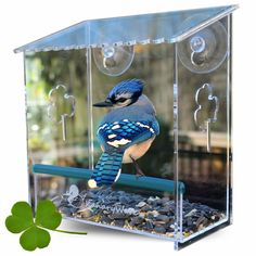 Amazon.com : Window Bird Feeder for Small and Large Wild Birds. Birdhouse is Clear, Window Mounted, See Through, Squirrel Resistant, Easy to Install, With Drainage Holes & Beautiful Packaging. Makes a Great Gift! : Patio, Lawn & Garden