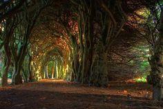 Il tunnel di alberi che conduce al Gormanston College, a Meath, in Irlanda.