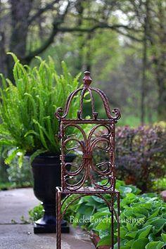 Raindrops on Hosta a garden walk.