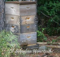 getting started beekeeping for beginners~the HomesteadingHippy