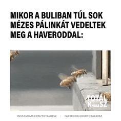 #viccek #vicceskép #viccesképek #viccesgif #viccesvideok #humoroskepek #poén #poénos #mém #mémek #magyarmeme #magyarmemek #hülyeség #hülyeségek #nevetés #nevess #részeg #pálinka Anna, Lol, Happy