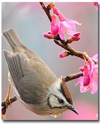1000+ images about Nature on Pinterest | Backyard birds ...