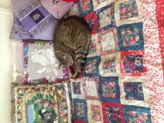 My first cat on my first quilt.