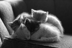 """takayababy: """" von—gelmini: """" If you're feeling a bit low today, have some cute kittens. Kittens don't judge. They just purr and are fuzzy and are love. So take a long look at the kittens, take a deep. Cute Kittens, Cats And Kittens, Fluffy Kittens, Foster Kittens, Orange Kittens, Pretty Cats, Beautiful Cats, Animals Beautiful, Hello Beautiful"""
