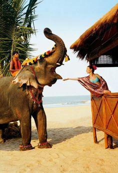 Riding an Elephant in Goa, India Goa India, Delhi India, North India Tour, Elephas Maximus, Places To Travel, Places To Visit, Elephant Ride, Happy Elephant, Asian Elephant