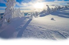 Big White has one of the best views on a powder day and you can ski between the snow ghosts